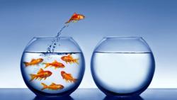 Pesce-rosso-sceglie-di-cambiare-vasca1