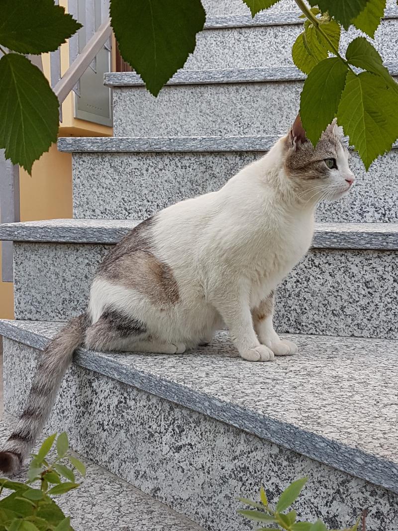 La filosofia esistenziale dei gatti